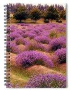 Lavender Fields 2 Spiral Notebook