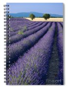 Lavender Fields Spiral Notebook