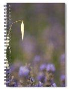 Lavender, France Spiral Notebook