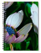 Lavender Frost African Daisy Spiral Notebook