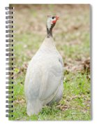 Lavender Guinea Spiral Notebook