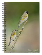 Lawrence Goldfinch Pair On Branch Spiral Notebook