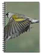 Lawrences Goldfinch Spiral Notebook