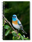 Lazuli Bunting Spiral Notebook