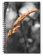 Lazy Afternoon 2 Spiral Notebook