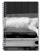 Lazy Cat Spiral Notebook