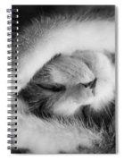 Lazy Day Bw Spiral Notebook