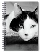 Le Cat Spiral Notebook
