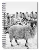 Leader Of The Flock Spiral Notebook
