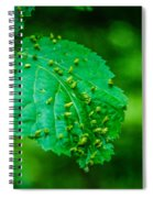 Leaf Gall Spiral Notebook