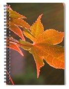 Leaf In The Sun Spiral Notebook