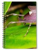 Leaf Katydid Spiral Notebook