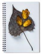 Leaf Study Spiral Notebook