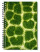 Leaf Veins Of A Sugar Maple Tree Spiral Notebook
