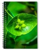 Leaf With Seeds Spiral Notebook