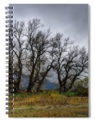 Leafless Trees Spiral Notebook