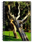 Leaning Cedars Of West Chop Spiral Notebook