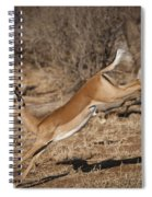 Leaping Impala Spiral Notebook