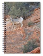 Learning How To Rock Climb Zion Spiral Notebook