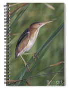 Least Bittern Spiral Notebook