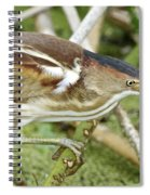 Least Bittern Female Feeding Spiral Notebook