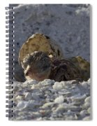 Least Tern Hatchling Spiral Notebook
