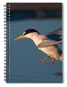 Least Tern In Flight Spiral Notebook