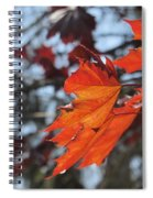 Leaves Backlit 3 Spiral Notebook