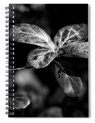 Leaves - Bw Spiral Notebook