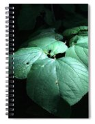 Leaves In A Patch Of Sunlight Spiral Notebook