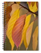 Leaves In Fall Spiral Notebook