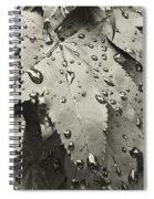 Leaves In Rain Spiral Notebook