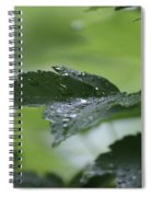 Leaves In The Rain Spiral Notebook