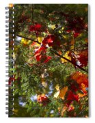 Leaves On Evergreen Spiral Notebook