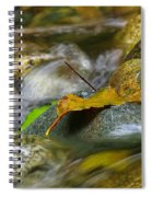 Leaves On The Rocks Spiral Notebook