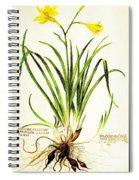 Lemon Daylily Botanical Spiral Notebook