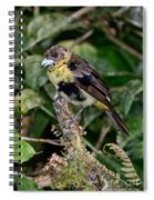 Lemon-rumped Tanager Molting Spiral Notebook