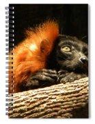 Lemur In Longing Spiral Notebook