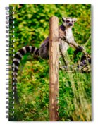 Lemur In The Green Spiral Notebook