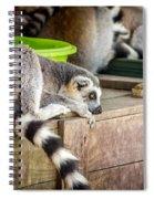 Lemur Spiral Notebook