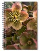 Lenten Roses Spiral Notebook