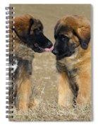 Leonberger Puppies Spiral Notebook