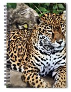 Leopard At Rest Spiral Notebook