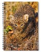 Leopard Cub Spiral Notebook