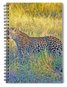 Leopard On The Prowl Spiral Notebook