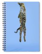 Leopard Panthera Pardus Spiral Notebook