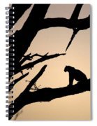 Leopard Sitting In A Tree Spiral Notebook