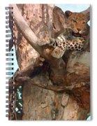 Leopard Up A Tree Spiral Notebook