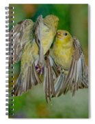 Lesser Goldfinch Females Fighting Spiral Notebook