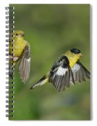 Lesser Goldfinch Pair In Flight Spiral Notebook